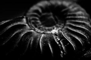 L'escargot et ses bienfaits